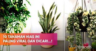 10 tanaman hias paling viral