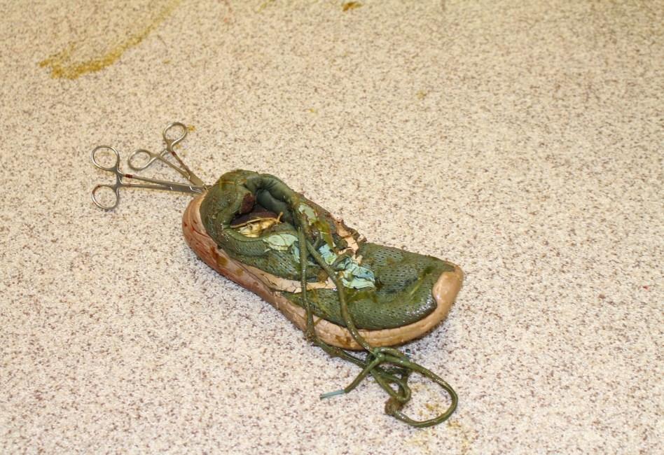 sepatu yang ditelan buaya