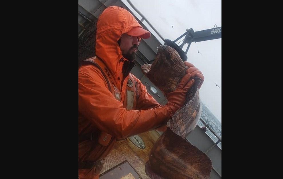 Penampakan belut laut serigala nate ethan