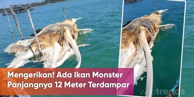 ikan monster terdampar