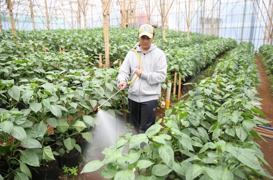 petani milenial sukses di bandung